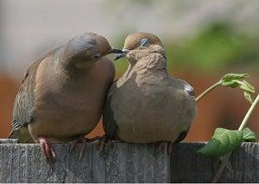 Doves_Verdance