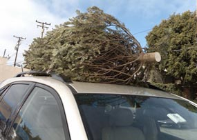 Why Buy a Christmas Tree When You Can Rent One?