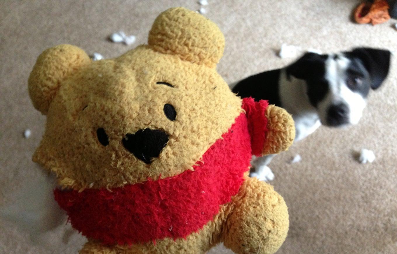 destroyed-stuffed-animal
