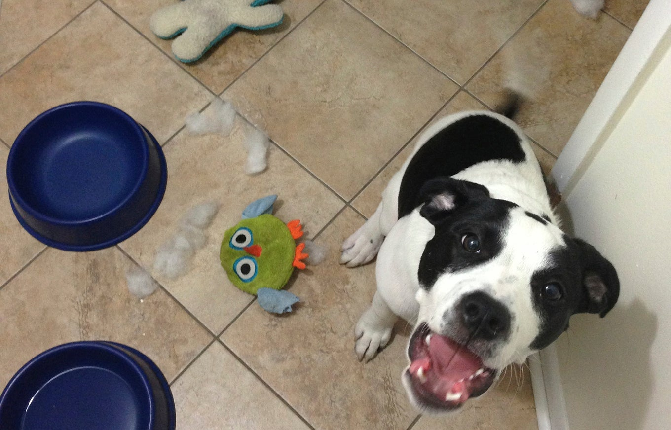 destroyed-dog-toy