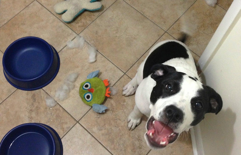 destroyed-dog-toy