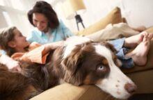 Why Your Credit Card Is Like the Family Dog