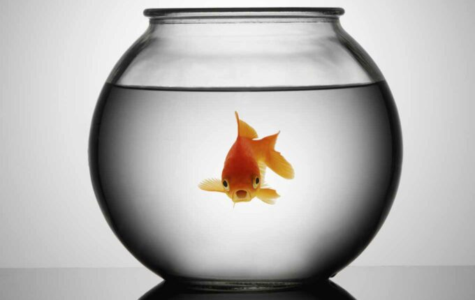 I Paid $450 to Save My Goldfish's Life