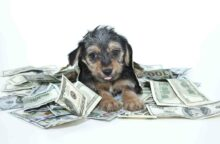 7 Ways to Save on Pet Care