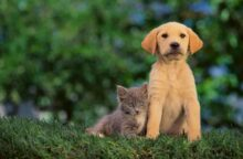 5 Credit Cards for Animal Lovers