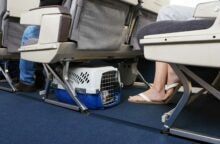 What It Costs to Fly Your Pet on Every Airline