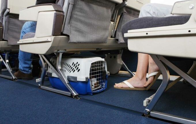 fly-with-pets