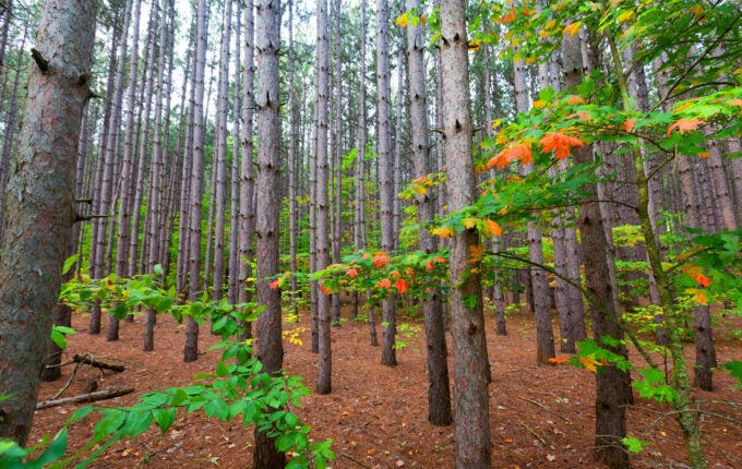 pine-preserve