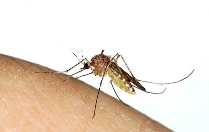 zika-scams