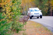 The States Where You're Most Likely to Hit a Deer