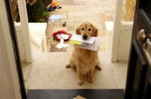 The Cities Where Postal Workers Are Most Often Attacked by Dogs