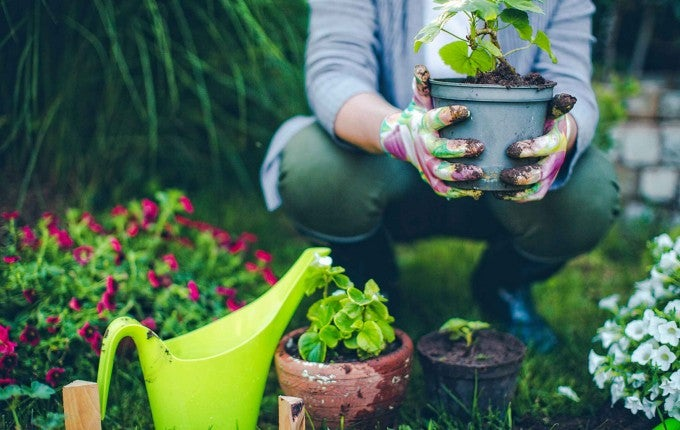A summer garden can be a wonderful hobby and investment when you follow these money saving tips!