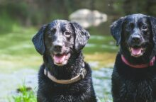 Can You Afford A Dog? Pet Ownership Costs Guide for 2020